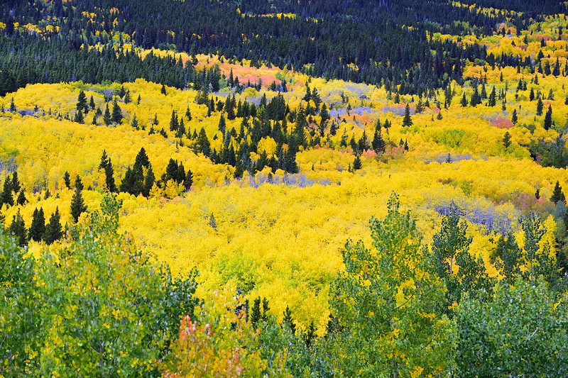 Boulder County Fall Colors