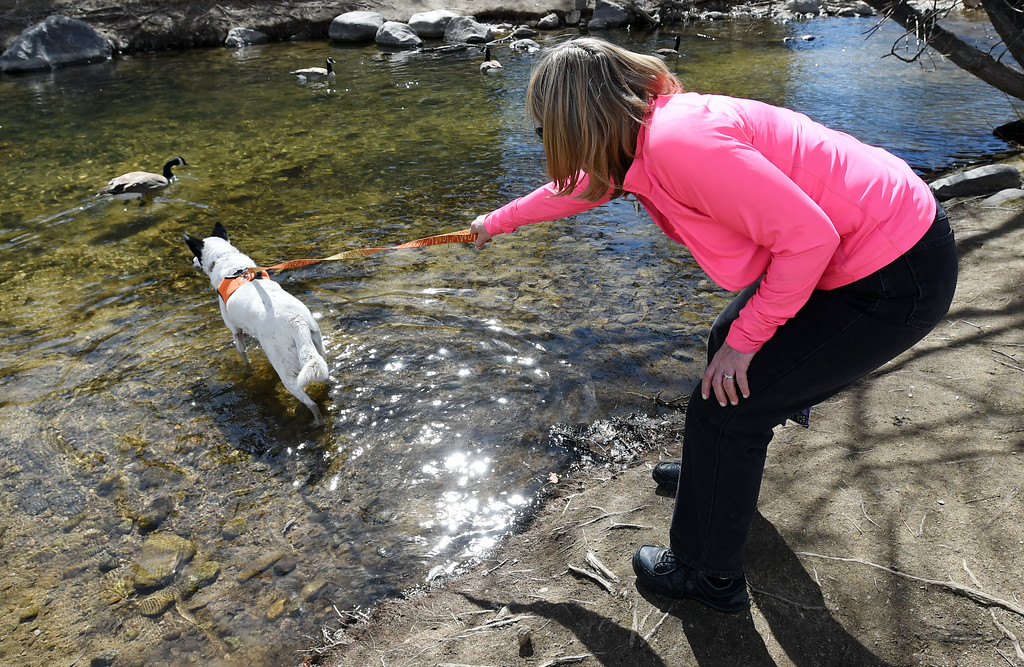 . Deborah Sato and her dog, Grace, check out the geese in Boulder Creek. Several people were enjoying Boulder Creek near the Boulder Public Library on Friday. For more photos, go to dailycamera.com. Cliff Grassmick  Photographer  March 9, 2018