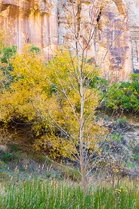 Canyon Wall, Calf Creek Canyon.