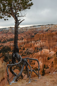Rim view of Bryce Canyon.