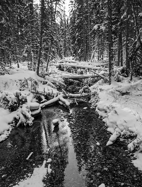Playing with B and W along Fox Creek.