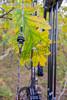 Archery, bow string peep sight