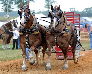 2010 Horse Pull