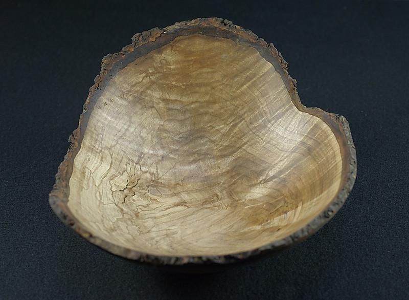 Canobie maple 1