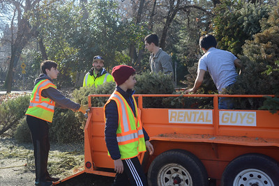 Left to right, Brendan Milani, 15, Recology's Fred Costilla, Peter Shippen, 14, assistant scout master David Hines, and Justin Lui, 16, unload tress from a trailer as Boy Scouts from Troop 2 and Recology work to recycle Christmas trees Saturday, Jan. 14, 2017, at Hooker Oak Park in Chico, California. (Dan Reidel -- Enterprise-Record)