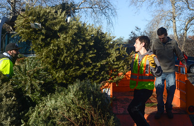 Left to right, Recology's Fred Costilla watches Brendan Milani, 15, toss a tree onto a pile of Christmas trees as assistant scout master David Hines clears the trailer as Boy Scouts from Troop 2 work to recycle Christmas trees Saturday, Jan. 14, 2017, at Hooker Oak Park in Chico, California. (Dan Reidel -- Enterprise-Record)
