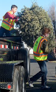 Boy Scouts from Troop 2 Hunter Dougherty, 15, left, and Tommy Ward, 15, right, work to recycle Christmas trees Saturday, Jan. 14, 2017, in Chico, California. (Dan Reidel -- Enterprise-Record)