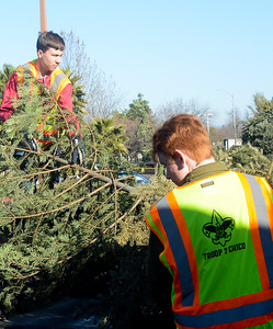 Boy Scouts from Troop 2 Hunter Dougherty, 15, left, and Tommy Ward, 15, right, work to recycle Christmas trees Saturday, Jan. 14, 2017, at Butte Bible Fellowship in Chico, California. (Dan Reidel -- Enterprise-Record)
