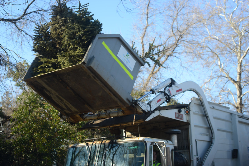Recology and Boy Scouts from Troop 2 work to recycle Christmas trees  Saturday, Jan. - Boy Scouts Recycle Trees - MNG-Chico