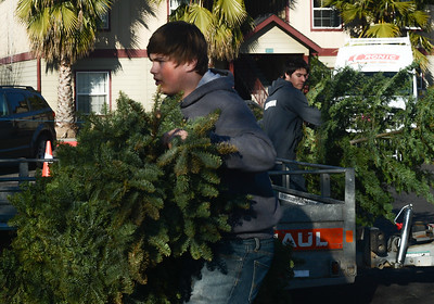 Boy Scouts from Troop 2 Josef Fredericks, 17, left, and Lawrence Loughman, 18, right, work to recycle Christmas trees Saturday, Jan. 14, 2017, at Butte Bible Fellowship in Chico, California. (Dan Reidel -- Enterprise-Record)