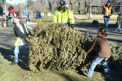 Left to right, Fred Costilla III, 10, left, struggles to move a Christmas tree but gets help from Fred Costilla, center, and Jakub Matousek, 6, as Recology and Boy Scouts from Troop 2 work to recycle Christmas trees Saturday, Jan. 14, 2017, at Hooker Oak Park in Chico, California. (Dan Reidel -- Enterprise-Record)