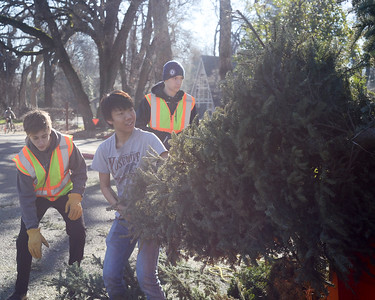 Boy Scouts from Troop 2, left to right, Brendan Milani, 15, Justin Lui, 16, and Andrew Gersch, 14,  work to recycle Christmas trees Saturday, Jan. 14, 2017, at Hooker Oak Park in Chico, California. (Dan Reidel -- Enterprise-Record)