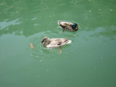 2011-06 Lake Englebright