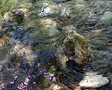 It's hard to capture the beauty of the water flowing over the stones.