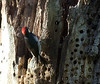 Woodpeckers still there on the way back...