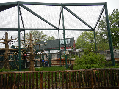 The Gibbon enclosure before construction, or even planning for that matter, had started.