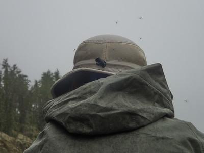 Mosquitos!