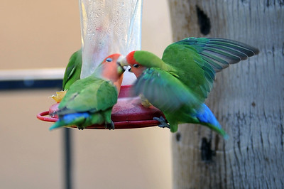 TALIESEN & BIRDS OF THE FEATHER