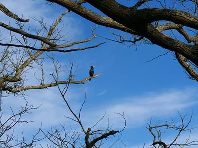 Big bird on the tree
