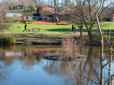 Dog walking South Hill Park, Bracknell