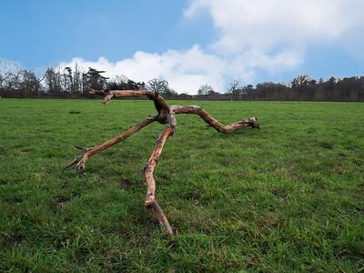 Branch of the tree that looks like three legged tripod