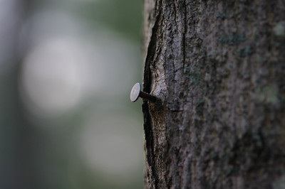 Which lasts longer the nail or the tree?
