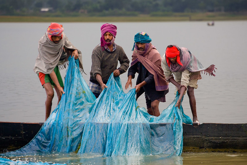 Fishermen pulling their net. Near Tezpur. Assam.