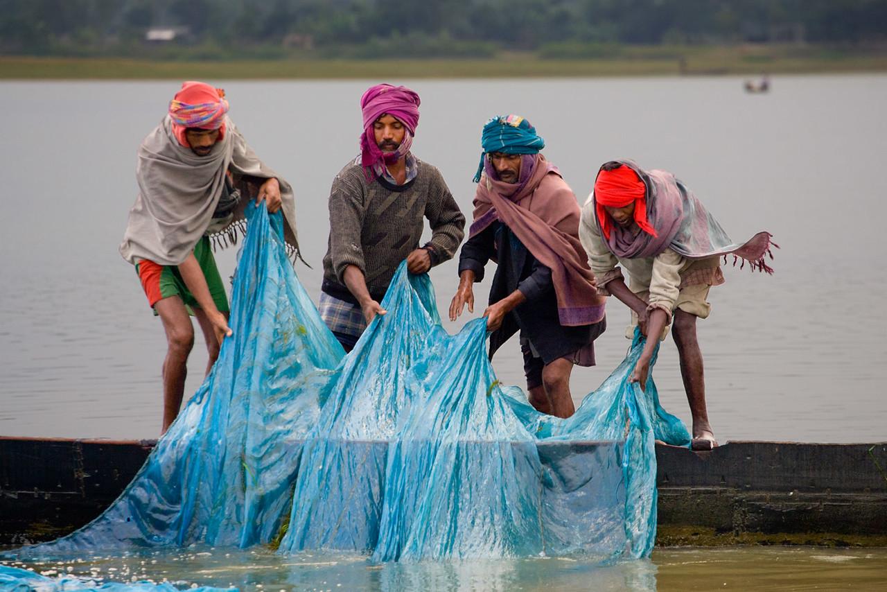 Fishermen pulling their net. Near Tezpur. Assam.