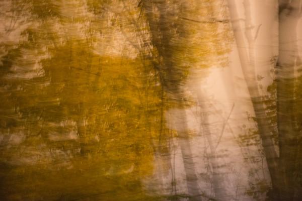 Tree Abstract #6