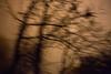 Tree Abstract #4