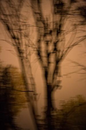 Tree Abstract #2