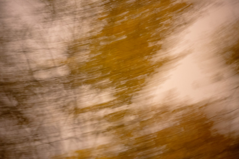 Tree Abstract #7