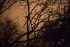 Tree Abstract #3