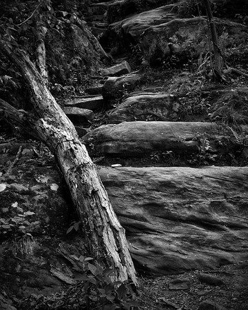 Roots & Rocks #1