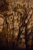 Tree Abstract #5
