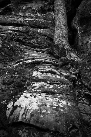 Roots & Rocks #2