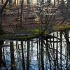 Dogwood Reflections