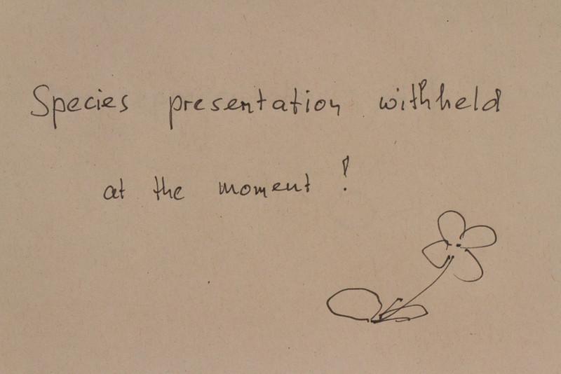 Species presentation withheld