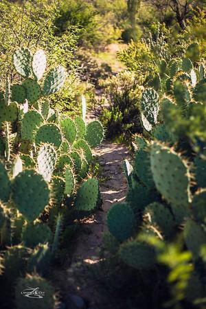 Lost Dutchman Trail, Superstition Mountains, Arizona.