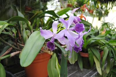 Brandt Moran, orchid grower
