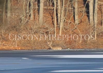 Deer Water Rescue 01/15/17