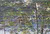 2005 branson oct 016