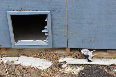 Hurricane _2012-11-05_17-07-07__DSC1631_©Jeffrey L Carson_2012