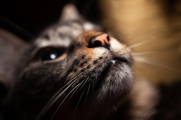Saki Cat