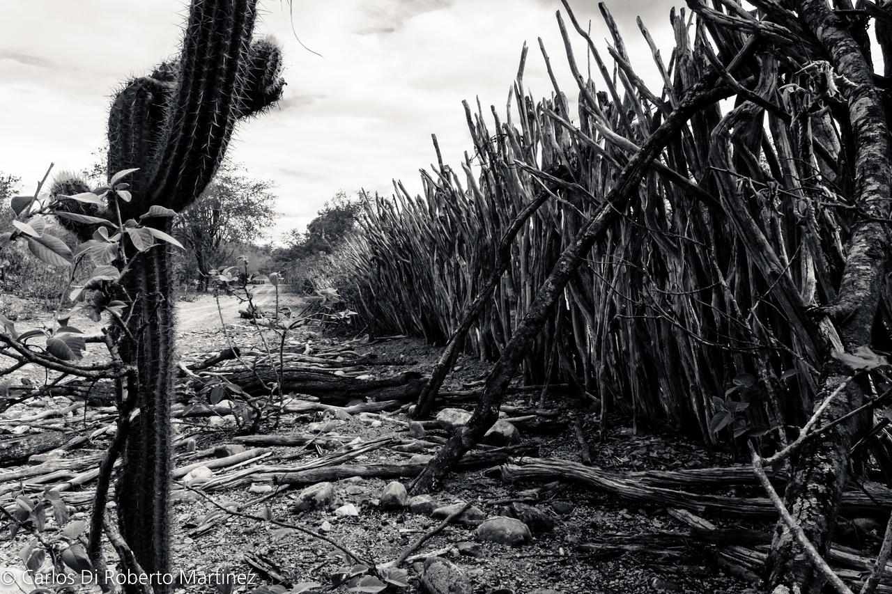 "Wooden Fence, Paraiba State ""Sertao"", near Cabaceiras"