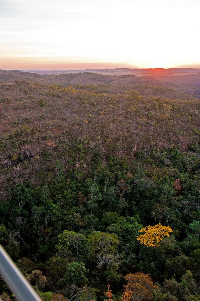This shot of the sunset gives a good idea of the Cerrado's natural vegetation, with lush plants in the watered creases of the land. It is late August, hopefully near the end of an unusually long dry season....  Almost 60% of Daterra remains virgin growth;  mountain lions still roam here.