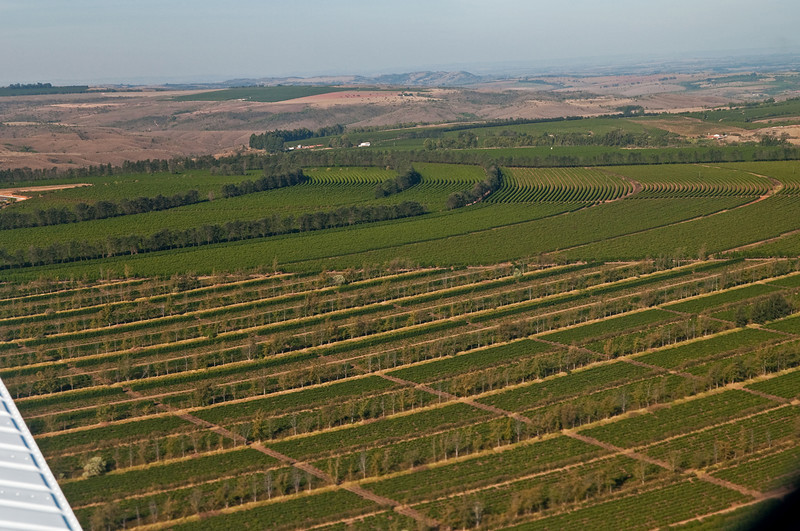 The coffee trees are planted in long hedges for mechanical harvesting.  Taller trees act as wind breakers.  The browns of the uncultivated Cerrado can be seen in the background with green patches of farmland, all on flat tabletops at elevations at or above 3,000 feet.