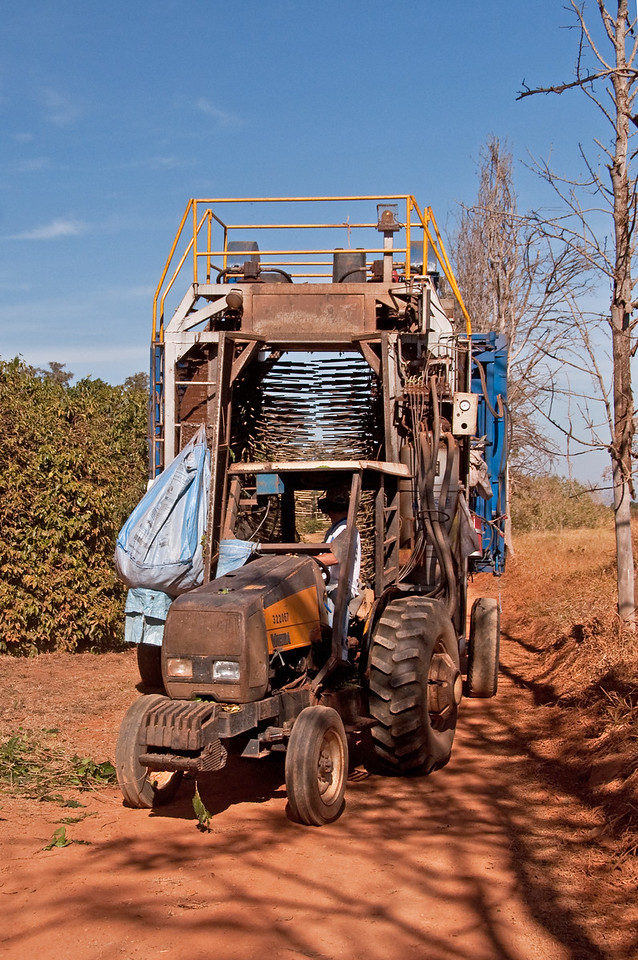 A mechanical harvester used at Daterra. The trees will go through rotating rods seen in the back.