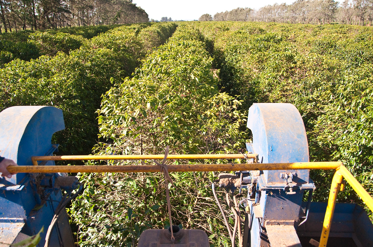 Looking from on top of the harvester in the back.  Two videos follow; I apologize for the pixilation: just learning about my little Kodak video! Leaves are spewed out the two large vents on either side while heavier coffee cherries are fall into long metal conatiners to the sides of the vents....