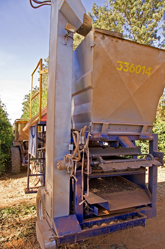 The debris goes to the back where the heavy cherries fall through screened holes, get moved by an augur to the left and then are blown up into the conatiner above.